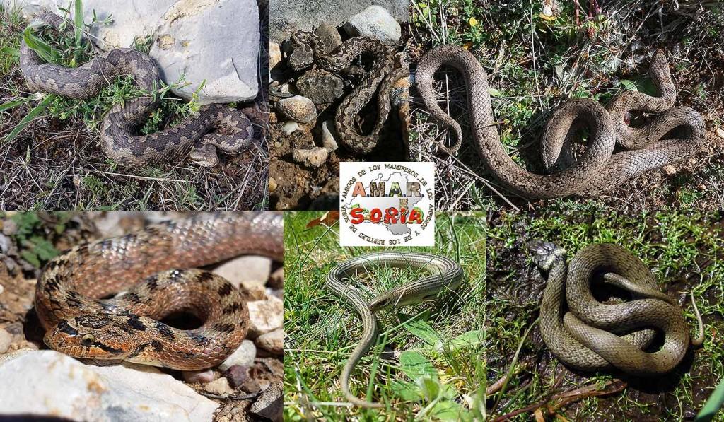 serpientes-de-Soria