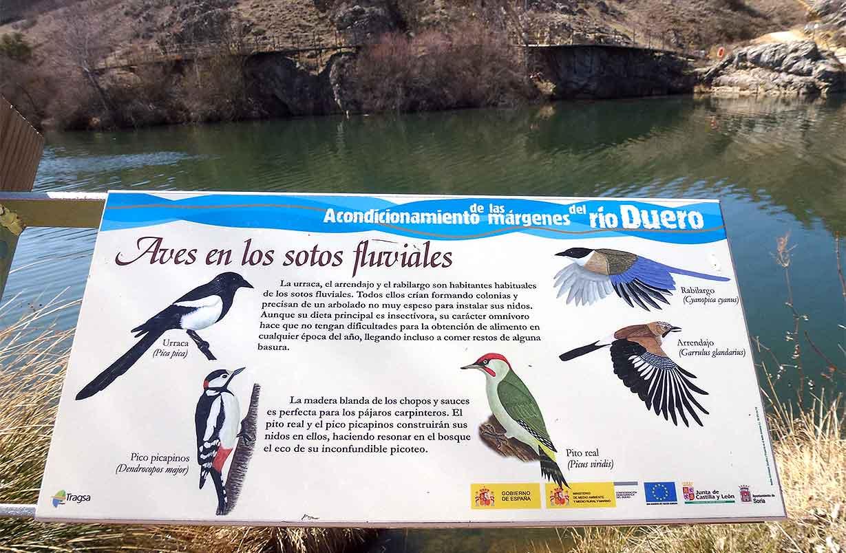 Aves-del-Duero-en-Soria