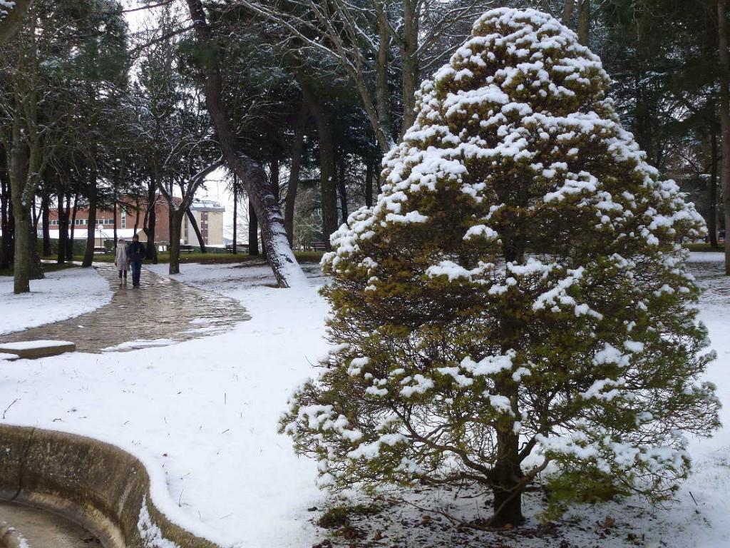 Dehesa de Soria con nieve y paseo