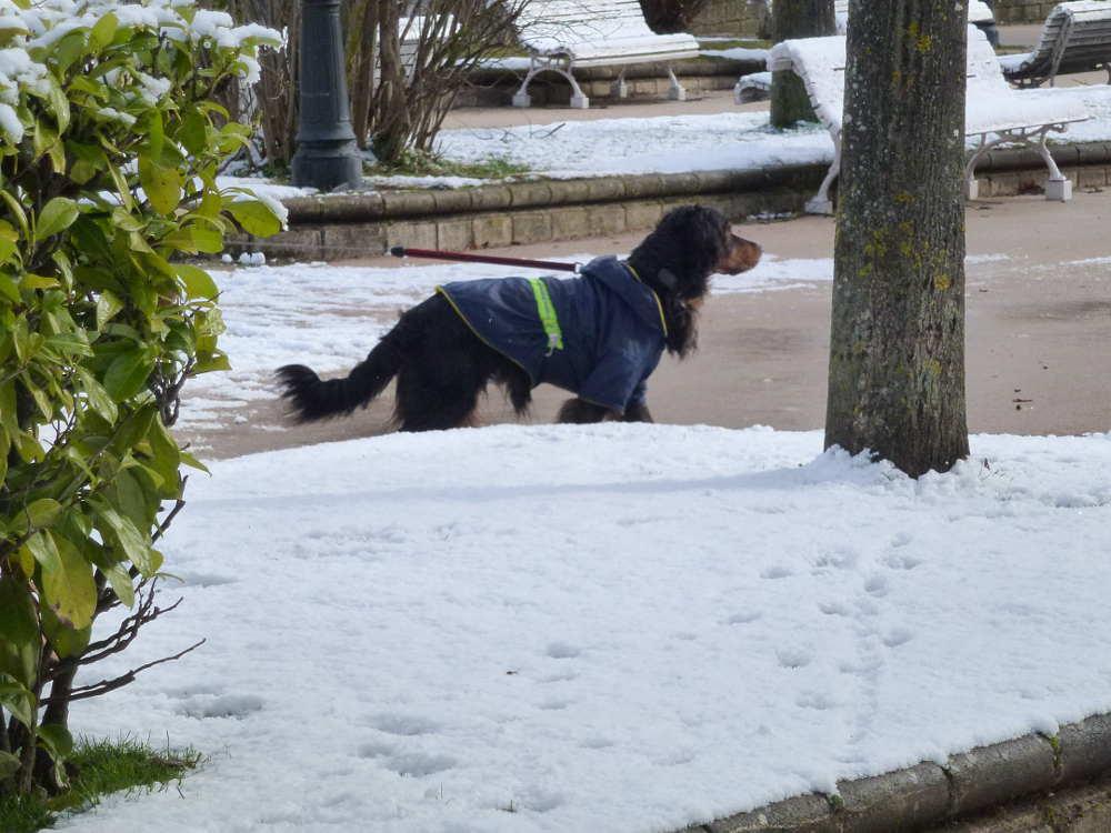 perro en Dehesa de Soria nevada