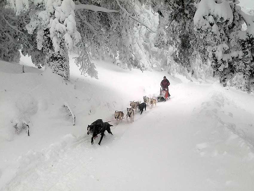 Trineo-con-perros-en-Santa-Ines-foto-de-Asothur