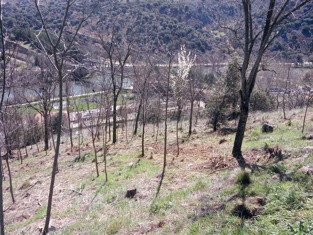 clareo-y-desbroce-ladera-del-castillo-en-Soria