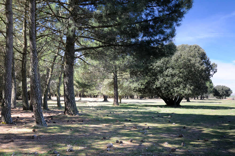 Monte Monjitos _Soria-Mancomunidad 150 Pueblos 1