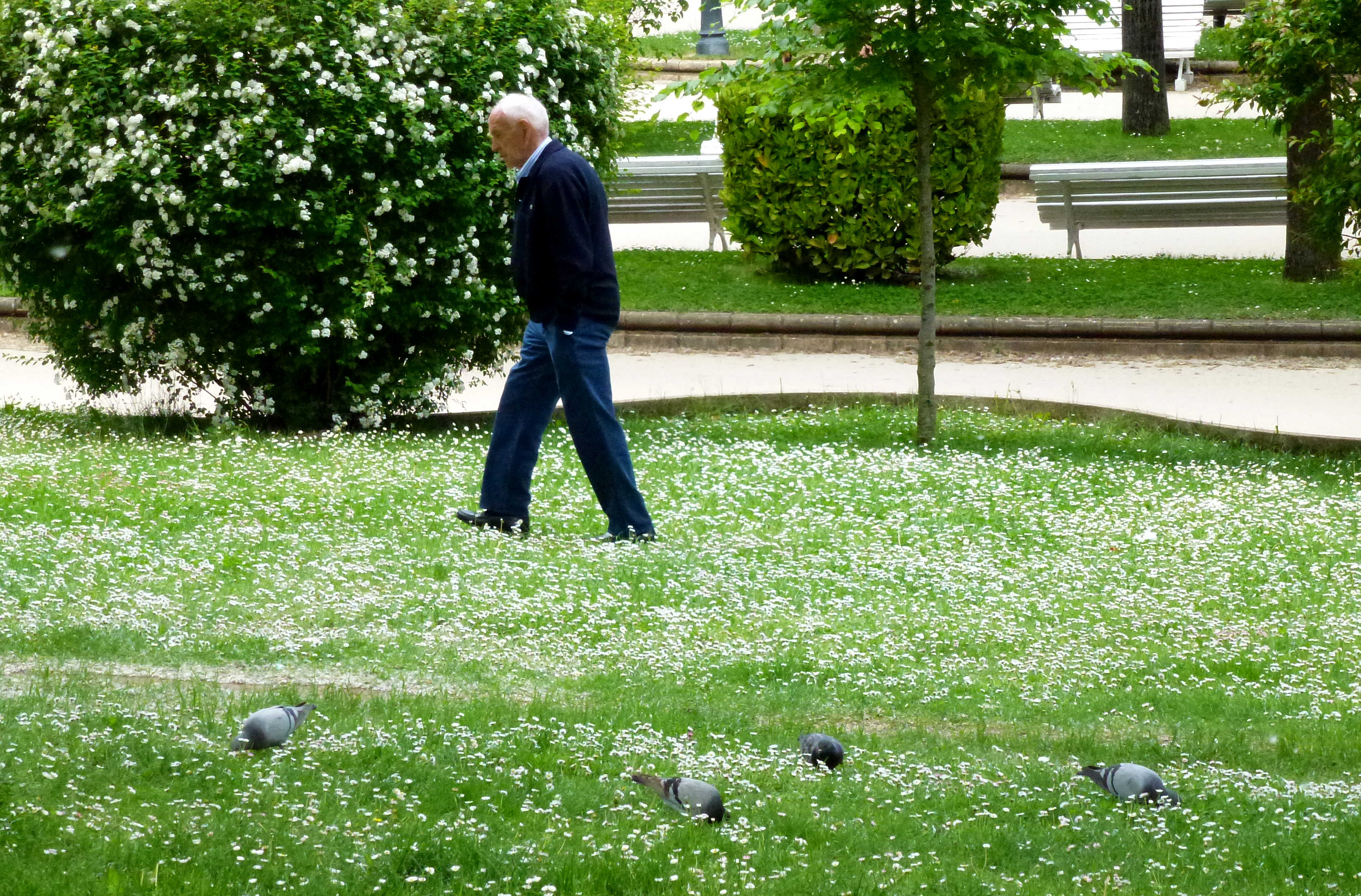 margaritas y palomas en Dehesa de Soria y caminante