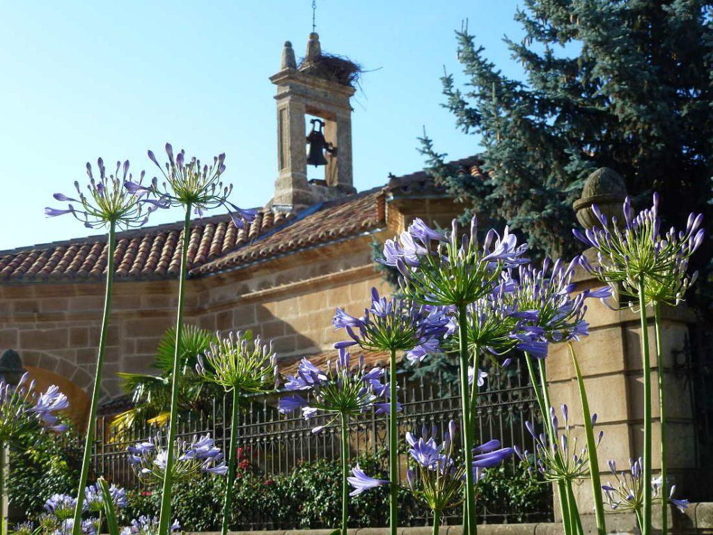 Flora Paseo del Espolon en Soria y ermita de La Soledad