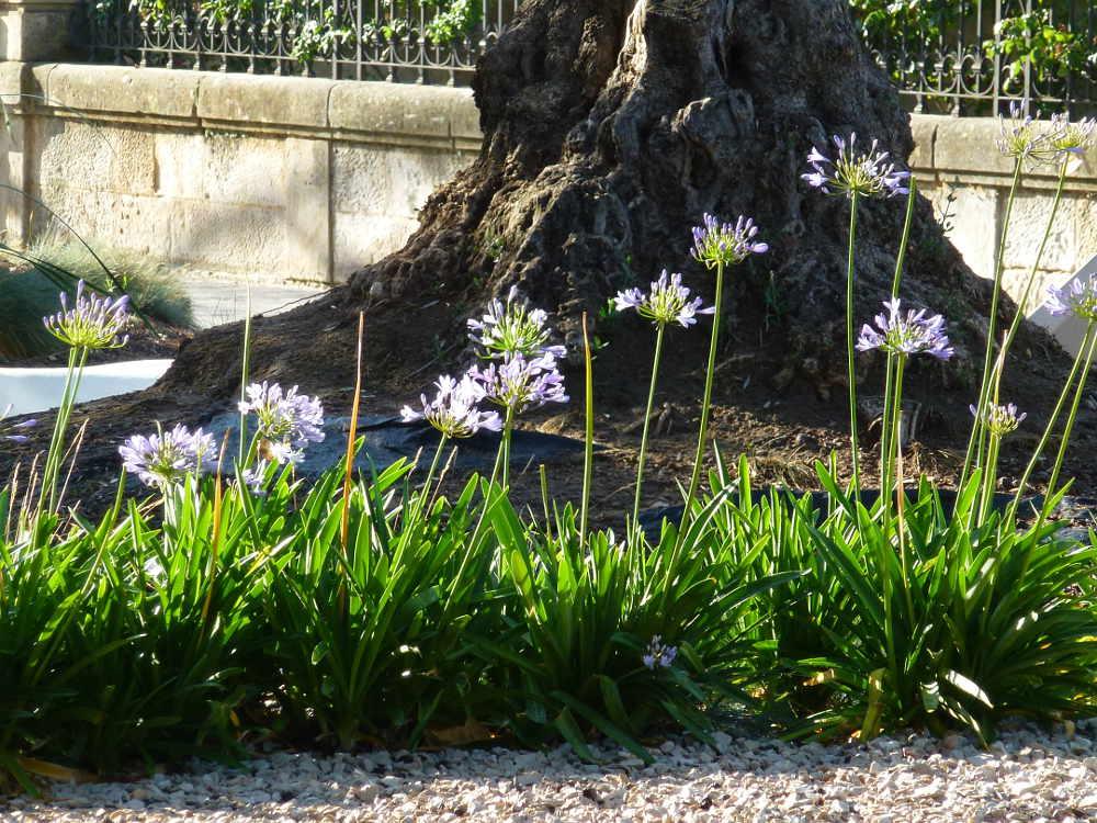 paseo del Espolon de Soria flora 4