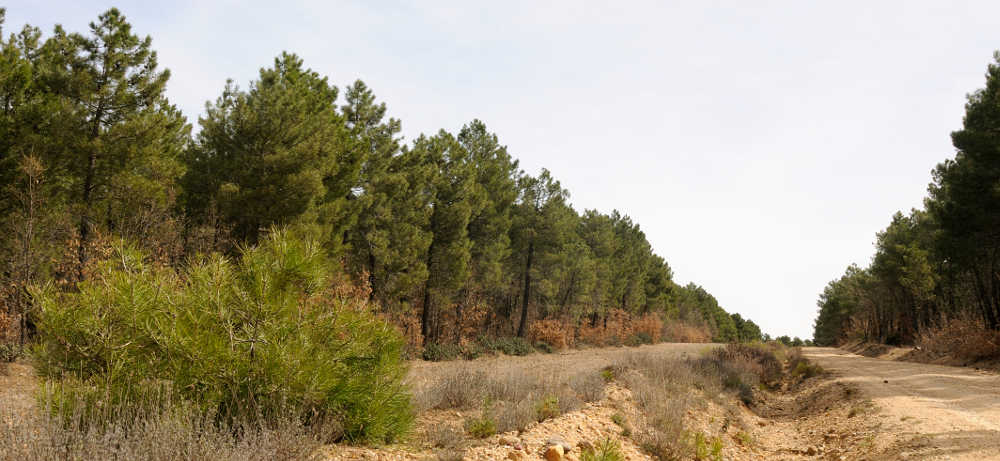 Monte Matas de Lubia Soria y camino rural