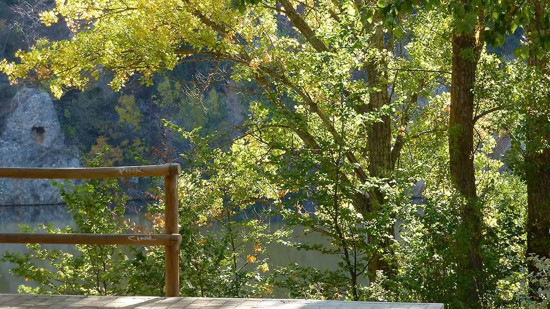 hojas-de-chopos-otonales-en-el-duero-soriano