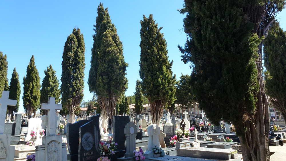 cipreses-en-cementerio-de-soria